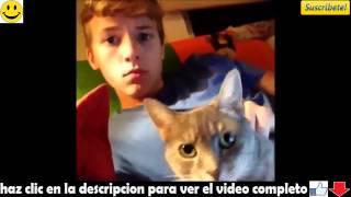 gatos graciosos  gatos divertidos 2015 Videos De Risa De Gatos