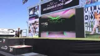 Iq K9 Training | Purina Incredible Dog 'rex' | 23' Fetch It | World Record