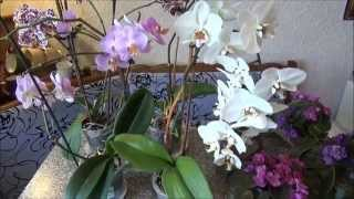Комнатные цветы, уход за орхидеями/Window plants, care of orchids(Сегодня мы научимся правильному уходу за орхидеями и комнатными цветами. Простые рецепты которые мы готови..., 2015-06-05T21:55:25.000Z)