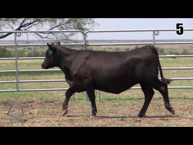 Pearcy Angus Ranch Lot 5