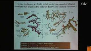 From Structure and Function of Ribosomes to New Antibiotics