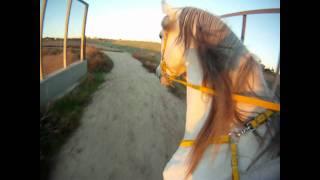 endurance horse sunset ride