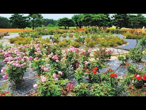 HOT NEWS Tokai 2017 Best Of Toka Japan Tourism