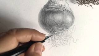 Drawing roots