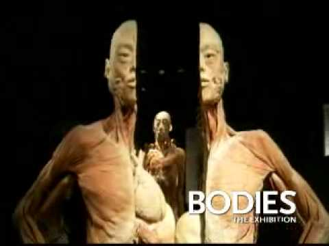 Bodies...The Exhibition Las Vegas