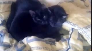 Котики умываються Доброе утро