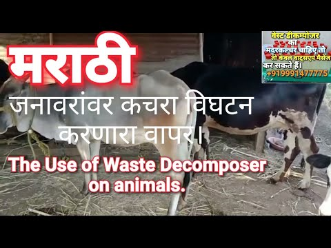 जनावरांवर कचरा विघटन करणारा वापर।Use of Waste Decomposer on animals@Waste Decomposer Amit Mahala