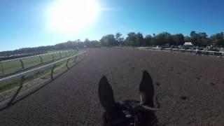 American Pharoah GoPro Gallop 8.28.15