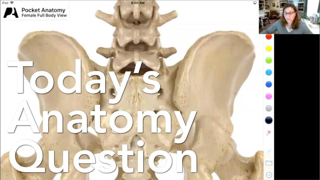 Todays Anatomy Question 26 Help What To Do During A Sacroiliac