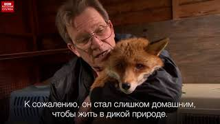 Дикая природа Лондона. Передача британского иновещания  BBC на русском языке от 27/03/2017