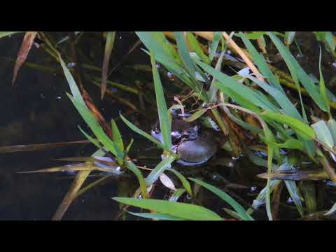 Frogs 4 11 15 00011