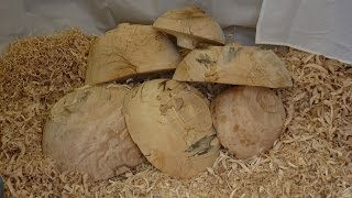 Woodturning Bowls Blanks Explained