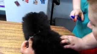 Чипирование собаки или как вшивают чип