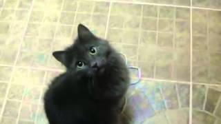 Говорящая кошка(, 2013-09-20T18:06:53.000Z)