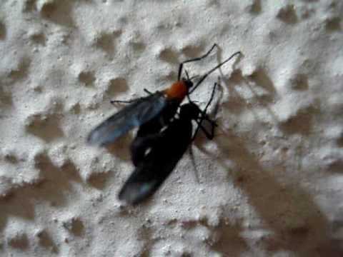 Insects... in Love!!!