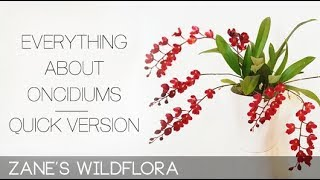 ● EVERYTHING ABOUT ONCIDIUMS ● Care, Watering, Light, Temps, Reblooming, Repotting...(Quick Version)