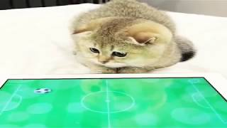 Funny Animals Vines 12 😂⛔ Cats compilation ⛔