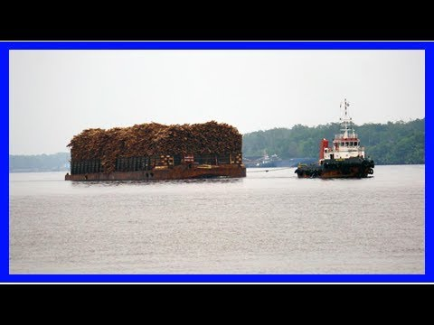 U.s. law deterring illegal wood imports, but global impact unclear