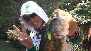 2015年4月26日 スポーニングシーズン真っ只中の青蓮寺ダムで開催されチ...