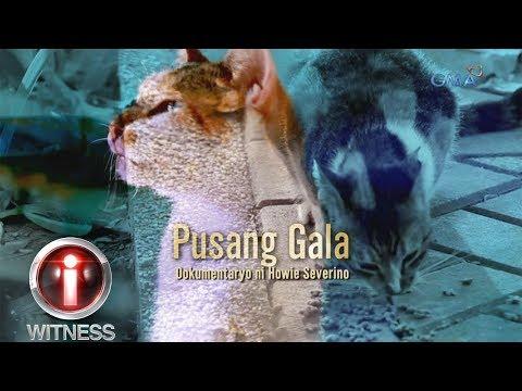 I-Witness: 'Pusang Gala,' dokumentaryo ni Howie Severino (full episode)