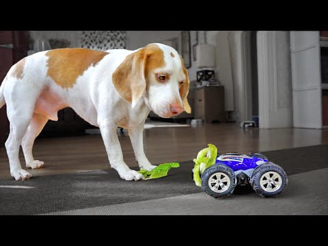 Owner Gets Dog to Eat Vegetables with Toy Car