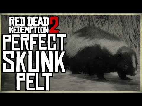 HOW TO GET A PERFECT SKUNK PELT - RED DEAD REDEMPTION 2 PRISTINE SKUNK HUNT