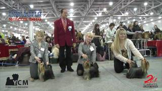 Eurasia 2010 - Yorkshire Terrier - Trailer