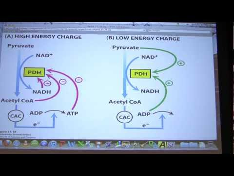 #29 Biochemistry Citric Acid Cycle II Lecture for Kevin Ahern's BB 451/551