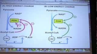 #29 Biochemistry Citric Acid Cycle II Lecture for Kevin Ahern