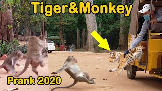 Tiger And Monkeys Prank In 2020, Amazing Running and Flying Fake Tiger and Wild Monkeys.