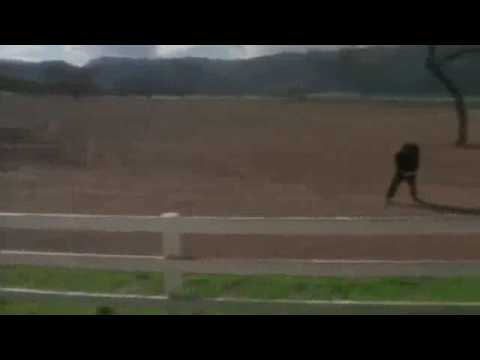 """Weird Al"" Yankovic - Amish Paradise Official Music Video"