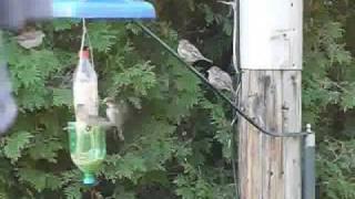 Bird Feeder Station,