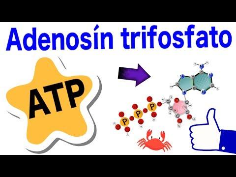 Adenosín trifosfato - ATP | Estructura, funciones, hidrólisis y ciclo 😸