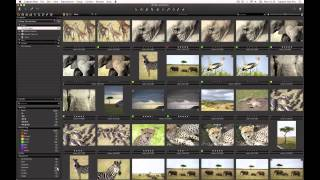 Search and Filtering in Capture One 7 | Phase One