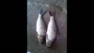 (фото отчет)о рыбалке.(, 2016-02-01T04:24:58.000Z)