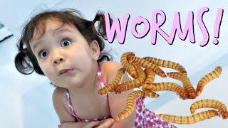 Eating Worms- January 19, 2017 ItsJudysLife Vlogs