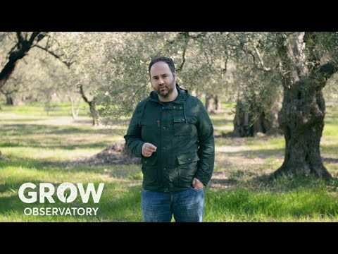 Meet a GROWer   Pavlos Georgiadis and his ancient olive grove in Greece.
