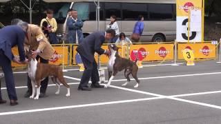 2014.04.20 FCI四国インターナショナルドッグショー(鳴門市大麻比古...