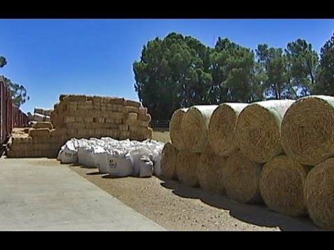 Famers to receive lifeline of over two thousand tons of cattle feed