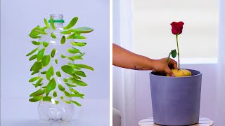 We're Rooting for These 12 Clever Plant Hacks! | DIY Gardening and Plant Tips by Blossom