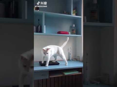 This cat love to knock over things