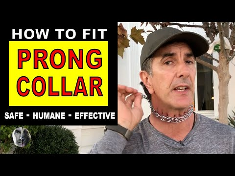 How To Fit a PRONG COLLAR on your DOG - Sizing Fit and Use - Robert Cabral - Dog Training Video