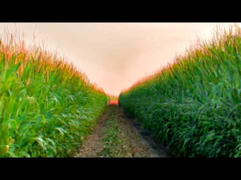 Jeffery Dallas' Akbar Music Video