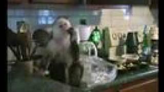 Deekie the Monkey stęals grapes!