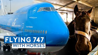 Flying KLM B747-400 Combi with Horses!