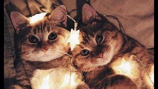 Котов близнецов забрали из приюта разные люди, но прошло 2 года и они вновь вместе...