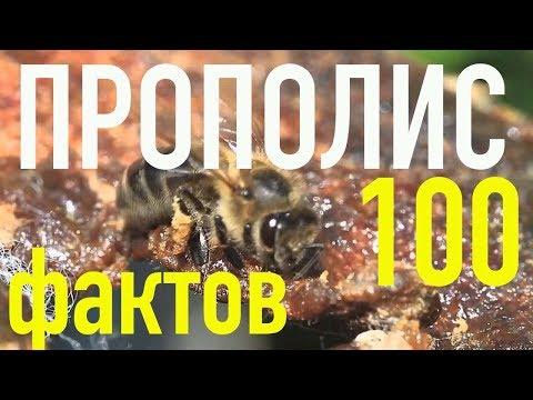 100 фактов о ПРОПОЛИСЕ (!!!) - лучшее природное лекарство!