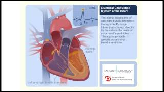 Electrical Conduction System of the Heart: In relation to ECG/EKG.mp4 thumbnail