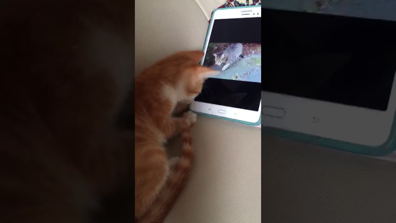 Kucing Lucu Video Call Sama Temannya Funny Cat Is Video Call With His Friends Youtube