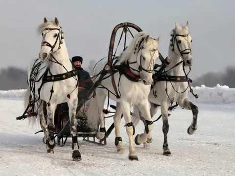 звуки проехжающей упряжки лошадей